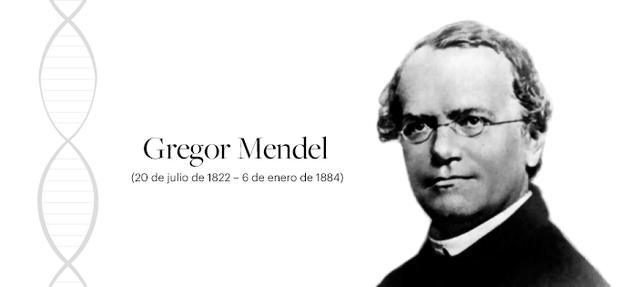 Mendel describe en los guisantes las unidades fundamentales de la herencia
