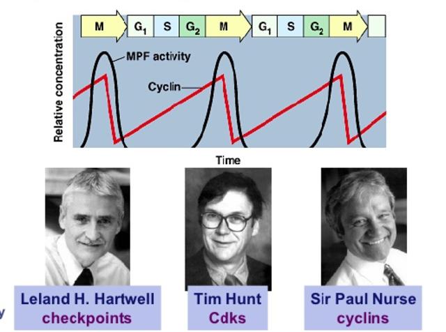 Hartwell, Hunt y Nurse