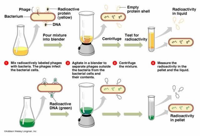 Los genes estan hechos del DNA