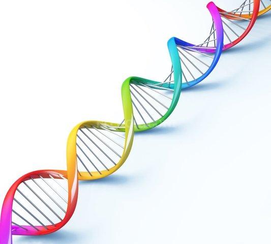 Phoebus Levene descubre finalmente el ADN