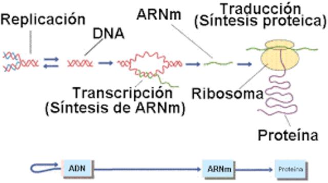 Descubrimiento de la transcripción inversa