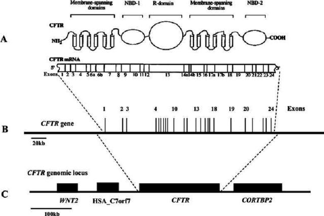 Primera secuenciación de un gen humano
