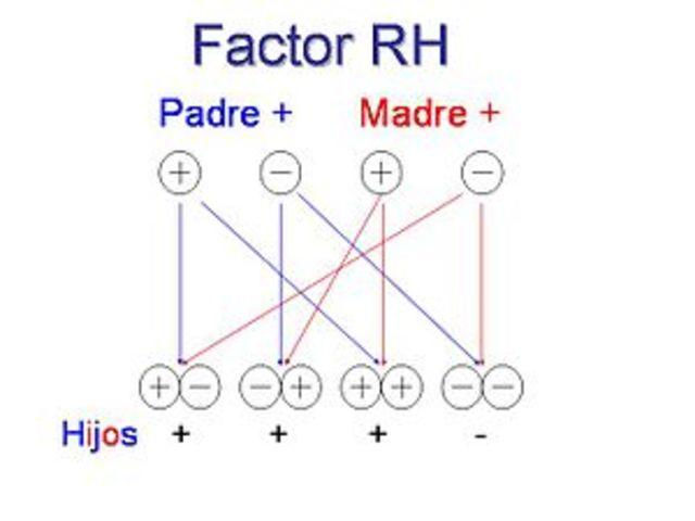 Grupo sanguíneo Rh