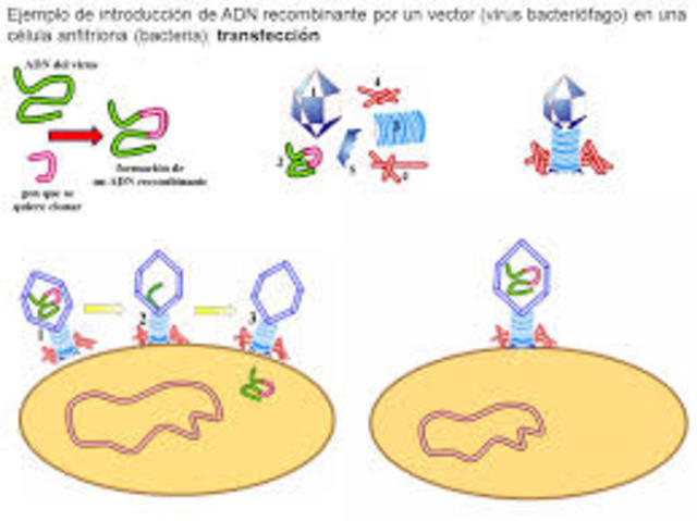 Introducción de ADN en bacterias
