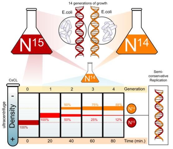 Demostración de la duplicación del DNA es semiconservadora