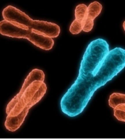 Cromosoma Y humano
