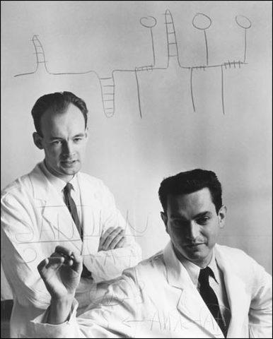 Marshall Nirenberg y Heinrich Matthaei descifran el código genético