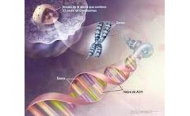 Se crea un catálogo genes poseídos en genoma humano