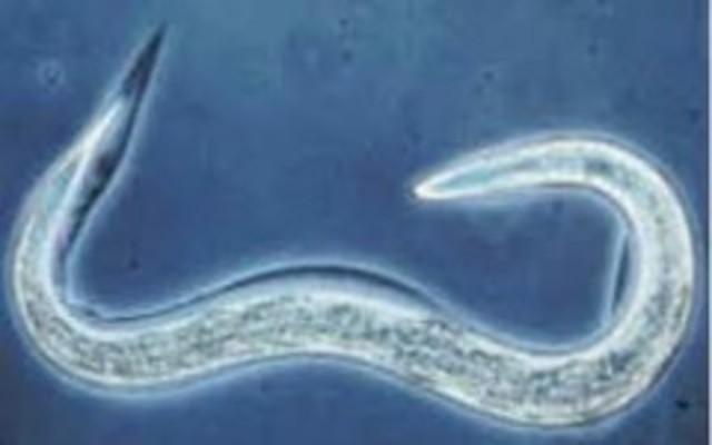 secuenciación del genoma de un multicelular