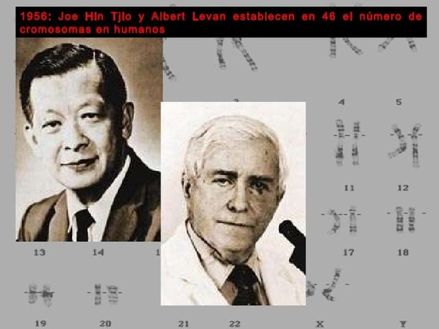 Joe Hin Tjio y Albert Levan determinan que es 46 el número de cromosomas en los seres humanos.