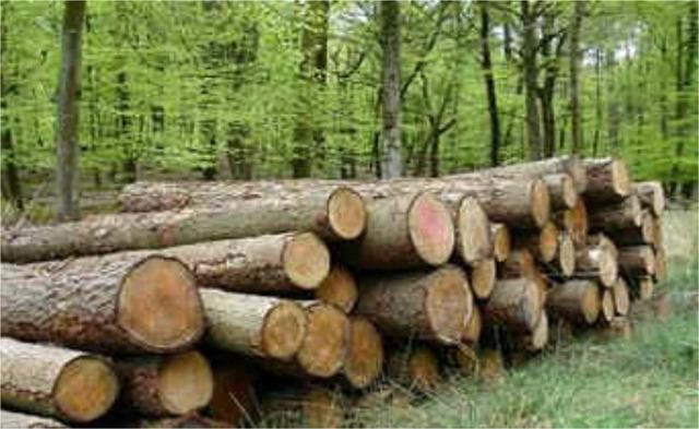 Ley General de Desarrollo Forestal Sustentable