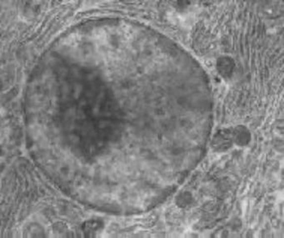 Fontana descobreix el nucli cel·lular