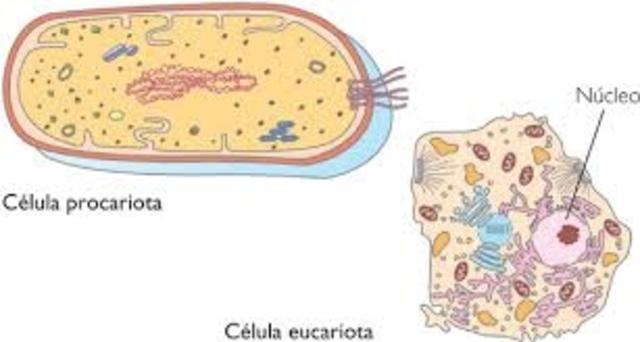 Anton Van Leeuwenhoek observa cèl·lules eucariotes i procariotes