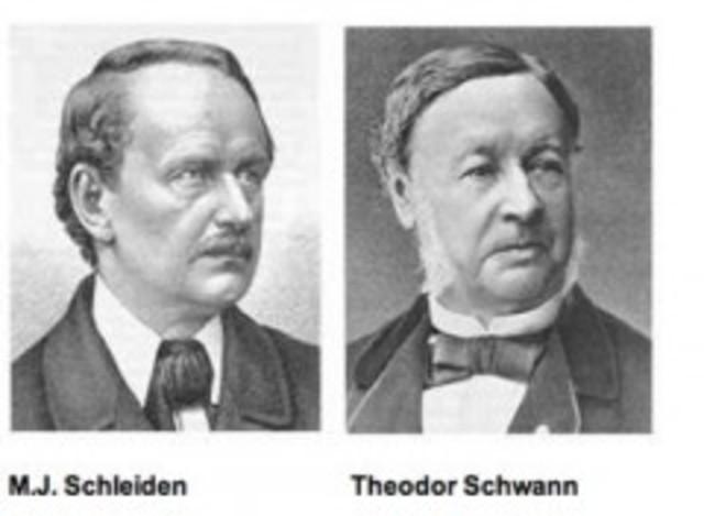 Theodor Schwann i Matthias Schleiden desenvolupen la teoria cel·lular