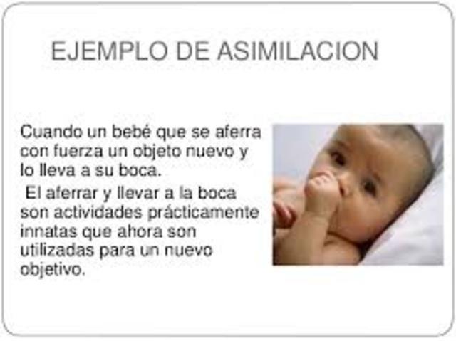 ASIMILACION