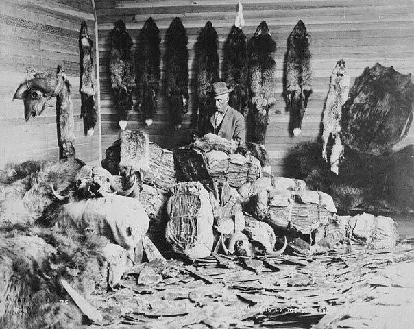 Economy Based on Fur trade