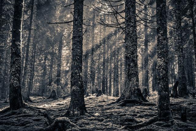 Возникновение лесной биржи в Минске
