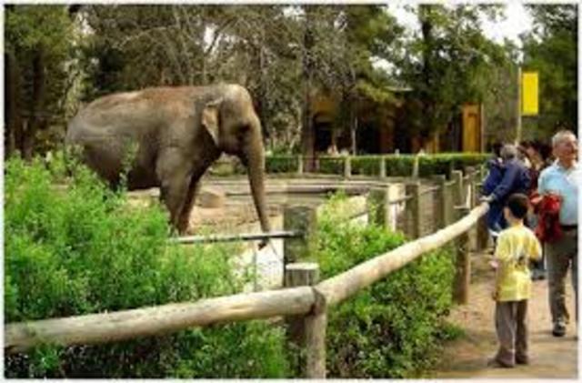 Mi primera visita a un zoologico