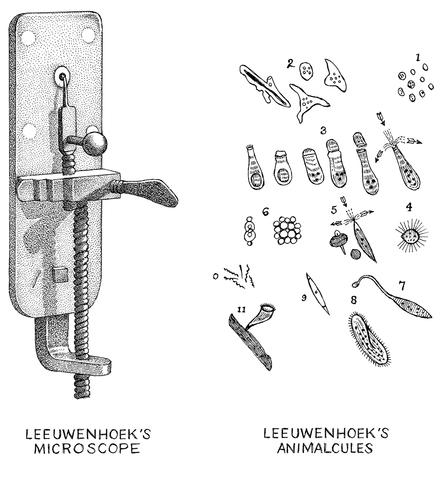 Leeuwenhoek's Research