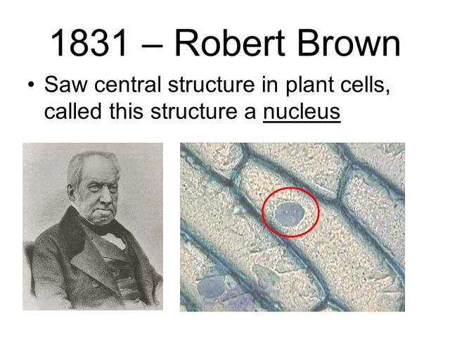 Brown's Research