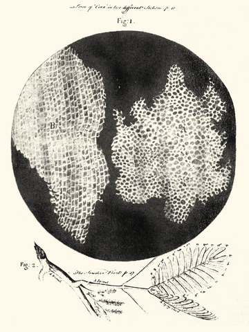 Hooke's Discoveries