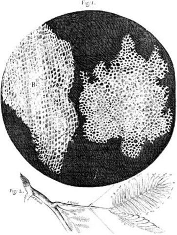 Hooke's Model