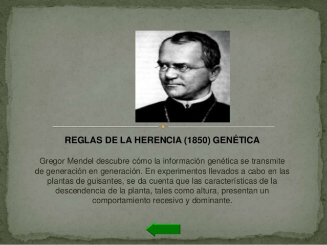 REGLAS DE LA HERENCIA