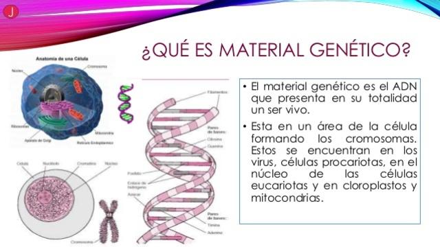 ADN ES MATERIAL GENTÉTICO