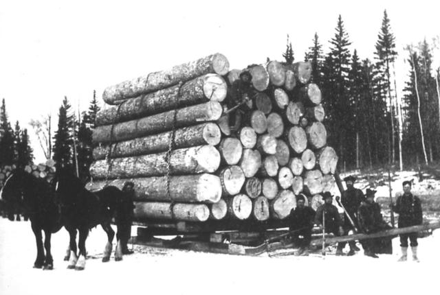Economy Based on Timber (Part 1)