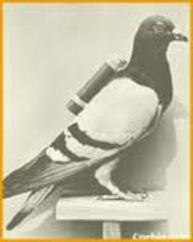 Carrier Pigeon, 990 BC
