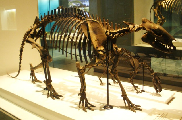 Horse Fossils
