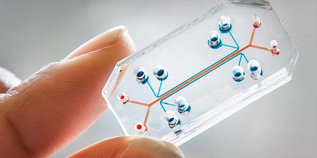 Invención de un microchip para la salud