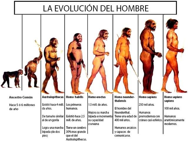 La evolucion del ser humano
