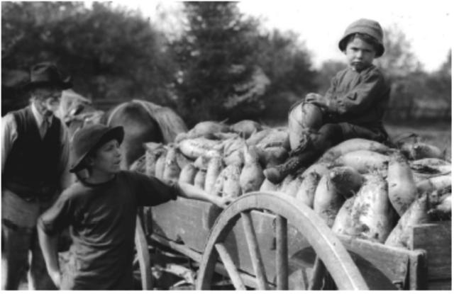 Abolishment of Corn Laws