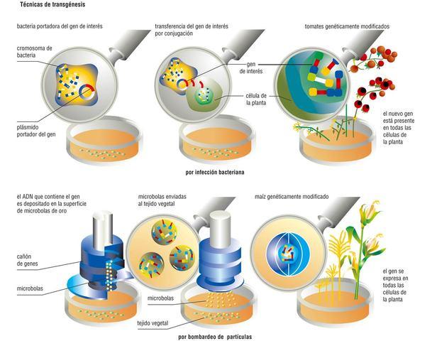 LA ADVANCE GENETIC SCIENCES LIBERA A CAMPO BACTERIAS RECOMBINANTES