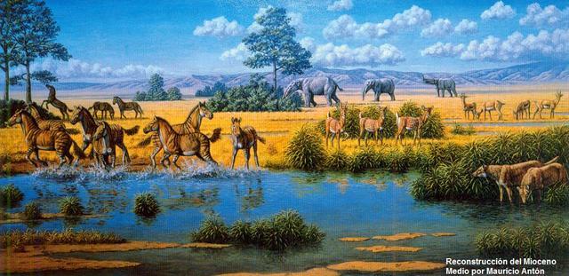 Epoca del Mioceno