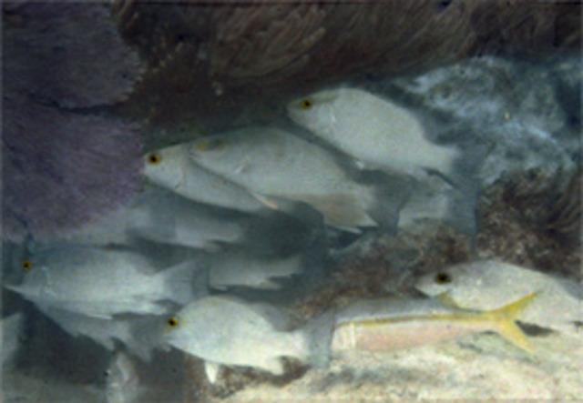 First Underwater Colour Photo