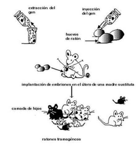 Biotecnología Tradicional