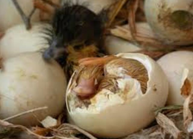 Animal life begins with an egg