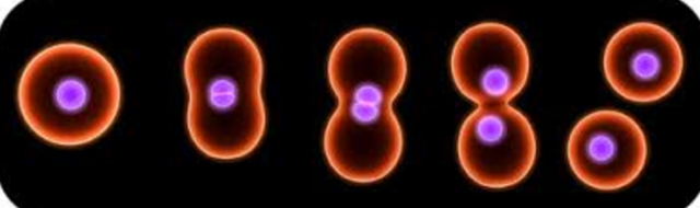 Cells can only arise from pre-existing cells