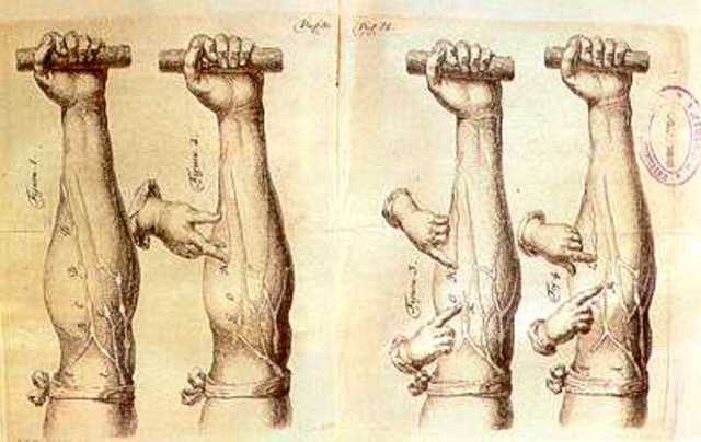 William Harvey: circulación sanguínea