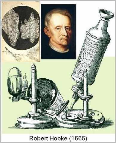 Robert Hooke, utilizando un microscopio, observa células biológicas.