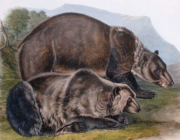 A spot where an animal profoundly affected the expedition