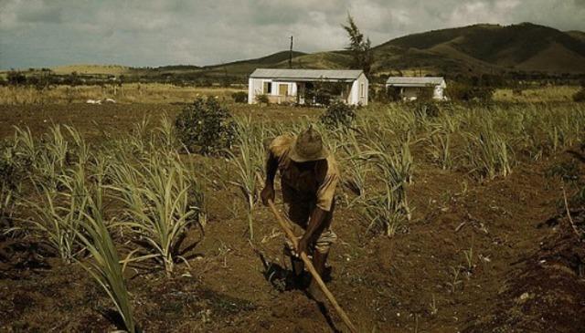 Aumento de la producción agrícola española