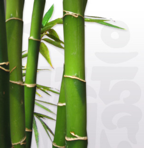 The growth rate of some bamboo (3 ft/day)0.0000237