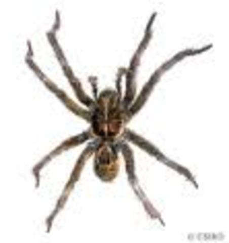 Spider  1.17