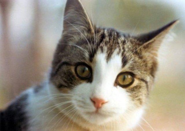 Cat 30
