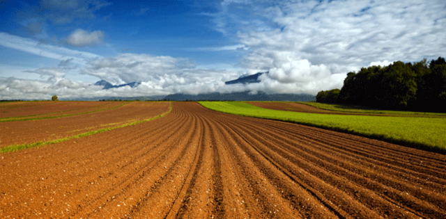 The Field Of Agriculture