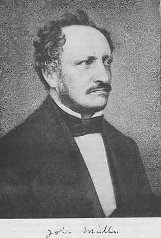 Johannes Müller (1801-1858)