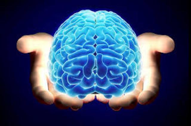 El cerebro humano a $ 1,000 dólares